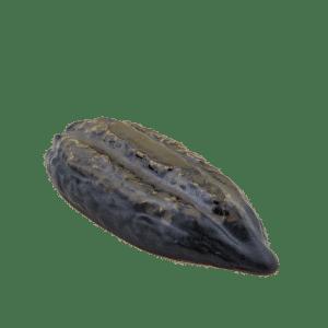 Cacaoboon van keramiek voor een perfect dessert